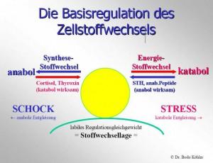 Basisregulation des Zellstoffwechsel von Dr. med. Bodo Köhler
